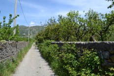 walk orchards