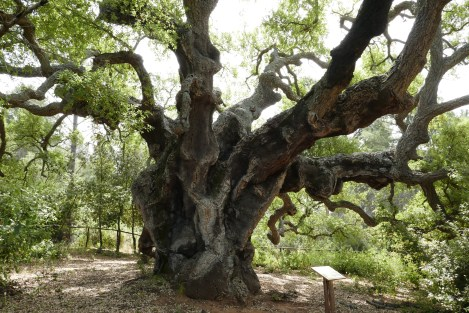 a corker trunk