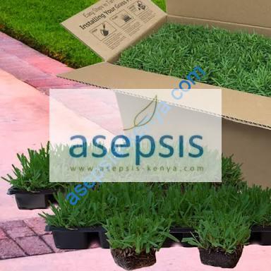 Grass plugs in Kenya
