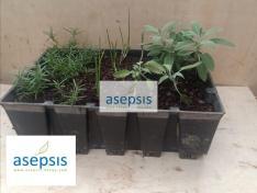 Kitchen Garden Herbs