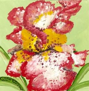 lily turned iris