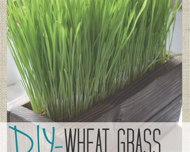 DIY- Wheat grass Crate {Part 1}