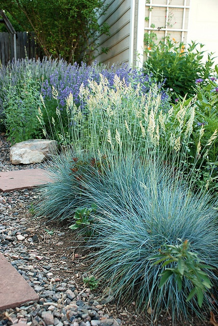 Drought tolerant landscape path ideas for Landscape grasses for sun