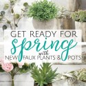 Get Ready for Spring with new Plants!