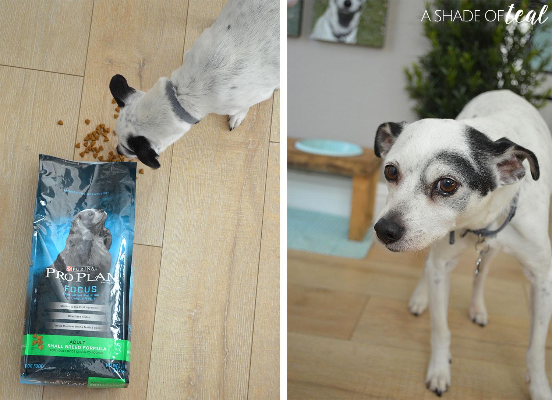 How to Make a Raised Dog Feeder