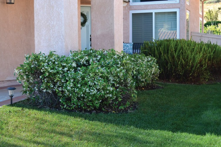 How to Maintain a Beautiful Lawn with TruGreen