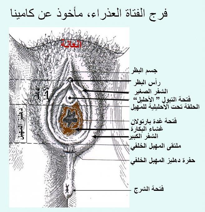 طريقة معرفة عذرية البنت كيفية معرفة البنت عذراء ام لا وكاله انباء الشرق العربي