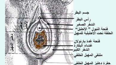 Photo of طريقة معرفة عذرية البنت ، كيفية معرفة البنت عذراء ام لا