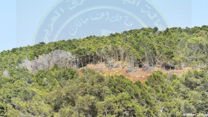 غابات الجبل الأخضر تصرخ للحفاظ عليها