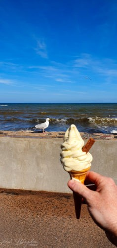 Ice Cream and seagull at the beach