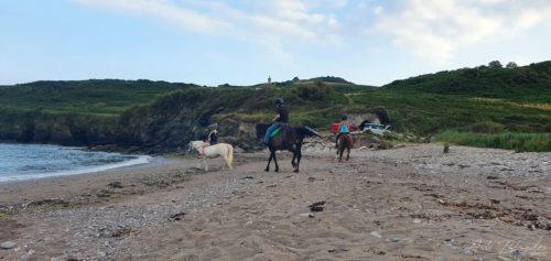 Horses enjoying the beach
