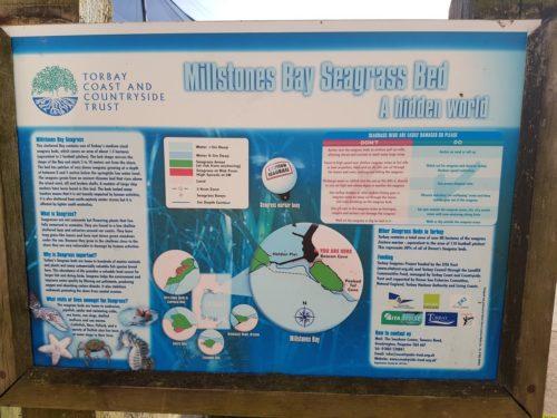 Seagrass Bed Beacon Cove, Torquay