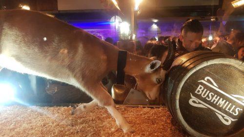 Thirsty Goat Belfast, Northern Ireland