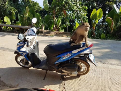 Moped Thailand