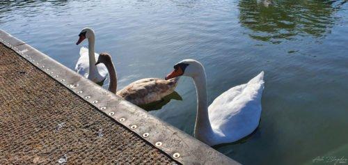Goodrington Park Lakes 2019 1