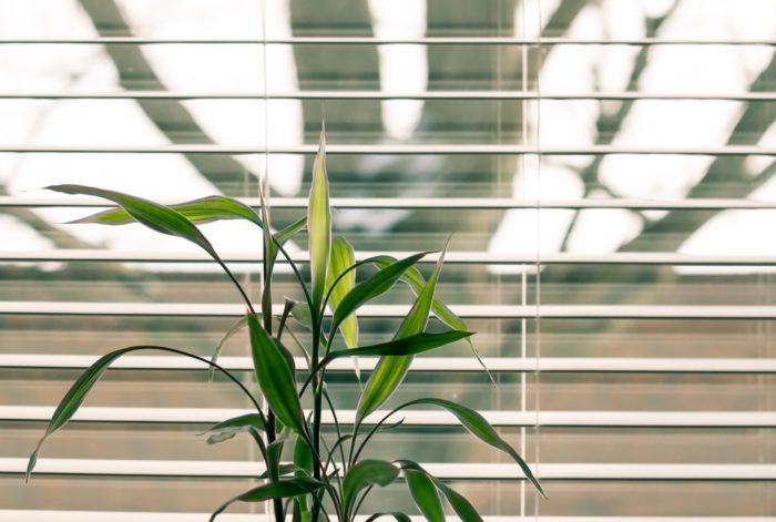 The Best Blinds for Controlling Light in Your Home
