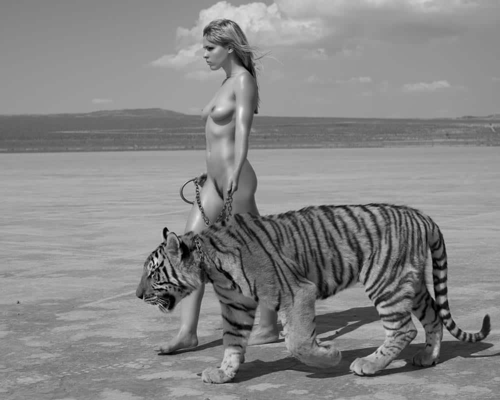 Sylvie Blum Tiger - Ashcroft ARt