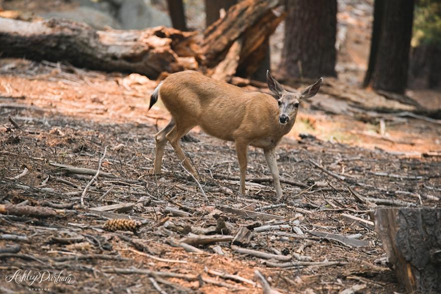 sequoia rv trip summer 2015_0023