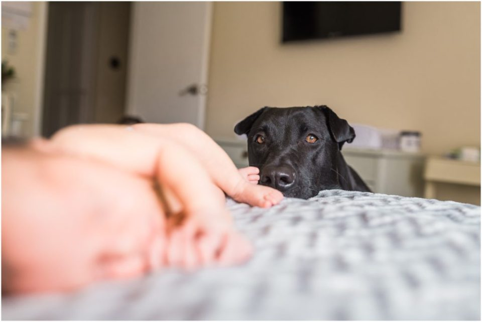 dog sniffing baby toes