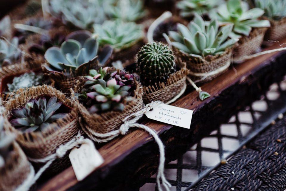 succulent wedding favors