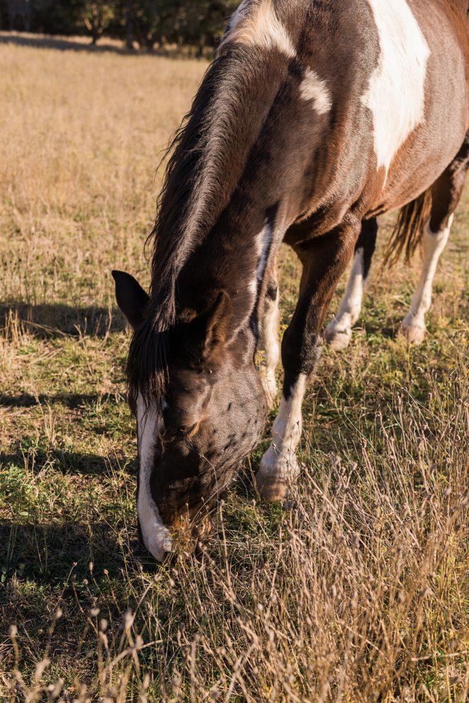 horse at rockin b ranch