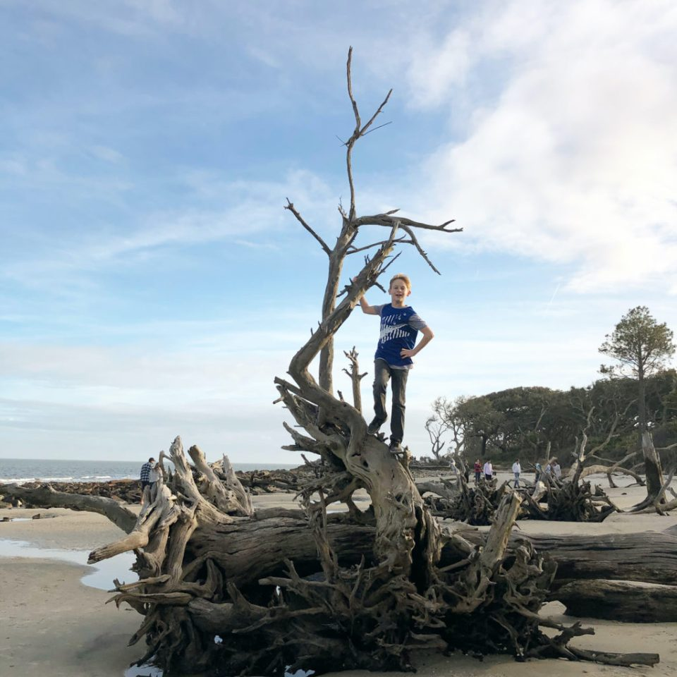 young boy climbing on top of driftwood on jekyll island