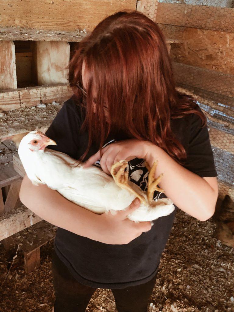 teenage daughter holding leghorn chicken hen