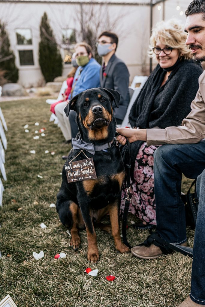 large rottweiler with funny wedding sign