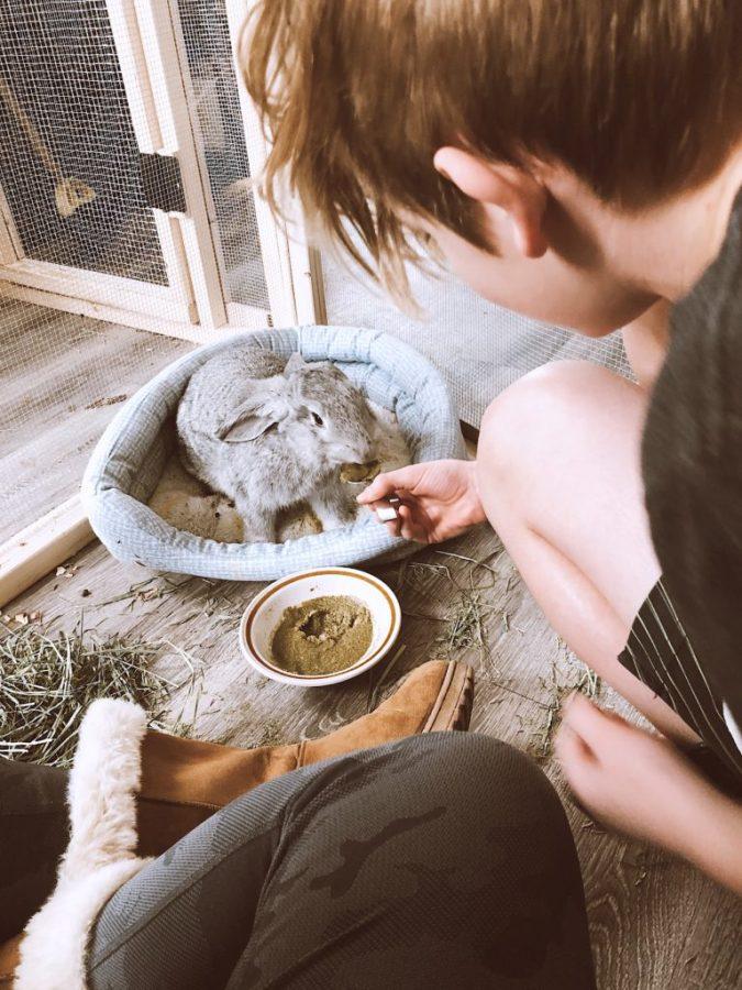 noah feeding rabbit