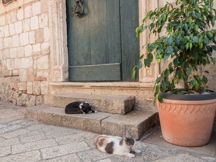 So many cats - Dubrovnik