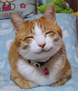 256px-So_happy_smiling_cat