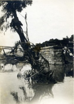 Flood of 1916. High water mark on tree, French Broad River at Asheville. Schandler Family Collection, UNCA.