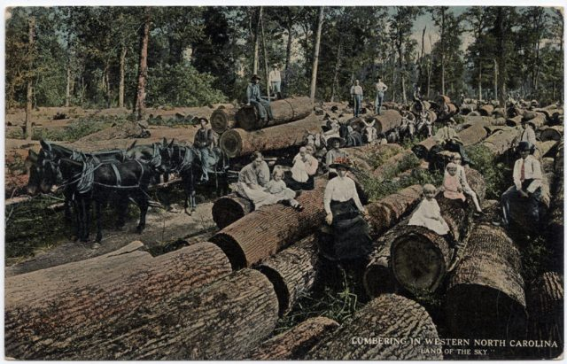 Lumbering in Western North Carolina, Land of the Sky. Industrial-scale logging, ca. 1905-1915, being done by hand, and hauled by mule teams rather than floated down flumes or hauled by Shay locomotives. Barbour Collection of North Carolina Postcards, North Carolina Collection, UNC Library