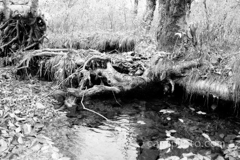 BW tree root over water