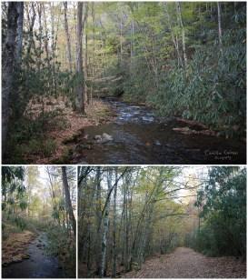 Wonderful stream view at Cataloochee Valley.