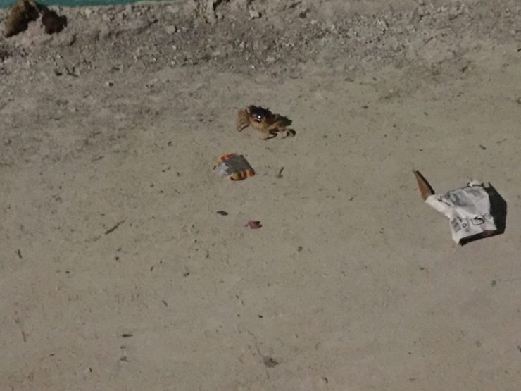 A crab roaming on the street in Caye Caulkar