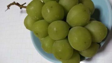 桃も葡萄もおいしい季節