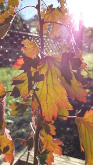 Foliage, 10 November 2013