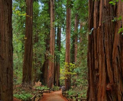 hiking-redwood-national-forest