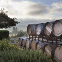 winery-barrels