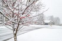 Snow & Berries