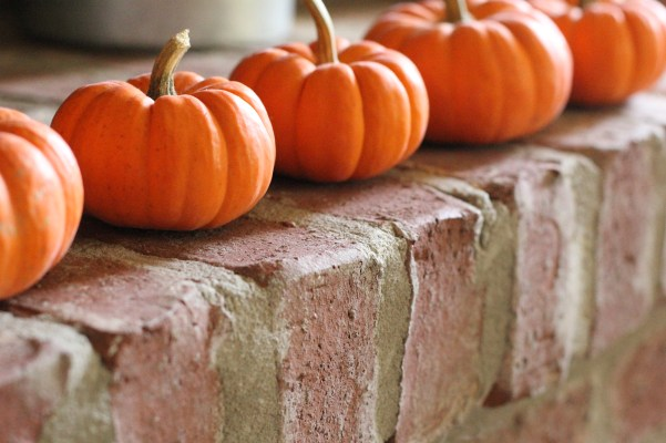 Fall Photography|Pumpkins
