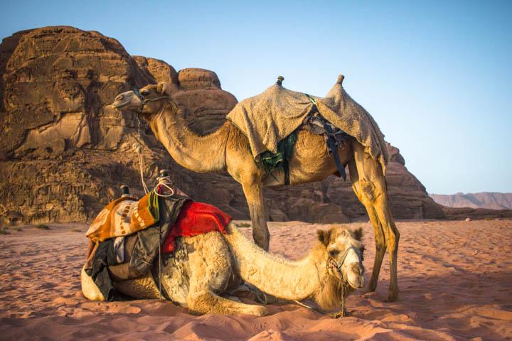 Wadi_rum_camel_saddles