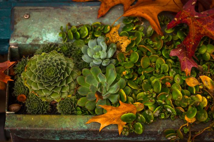 Seattle_Succulent