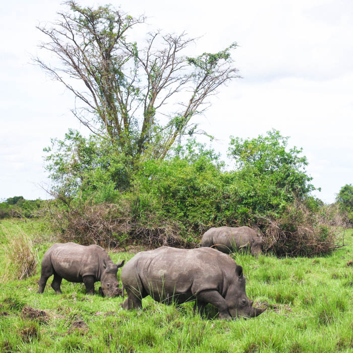 A Three-Day Itinerary for Murchison Falls National Park
