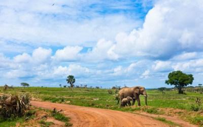 Safari in Uganda at Murchison Falls National Park
