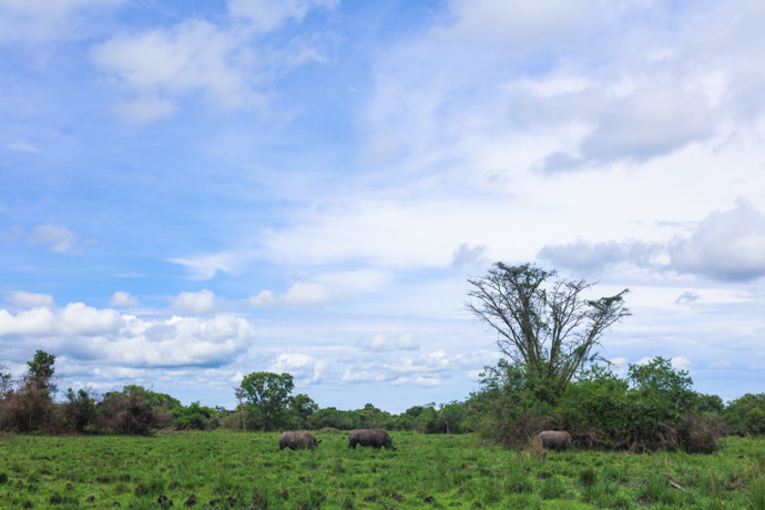 Rhino trekking at Ziwa Rhino Sanctuary in northern Uganda