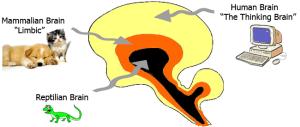 reptilian-mammal-thinking-brains