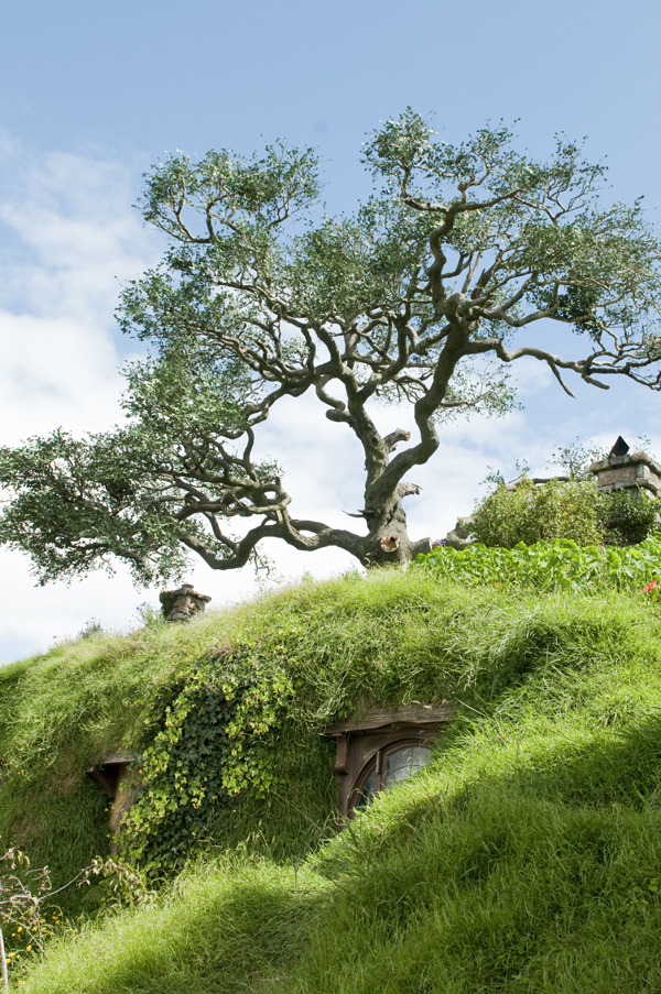New-Zealand-Hobbiton-the-Lord-of-the-Rings-tree-by-Ashley-Lynn-Photography (17)