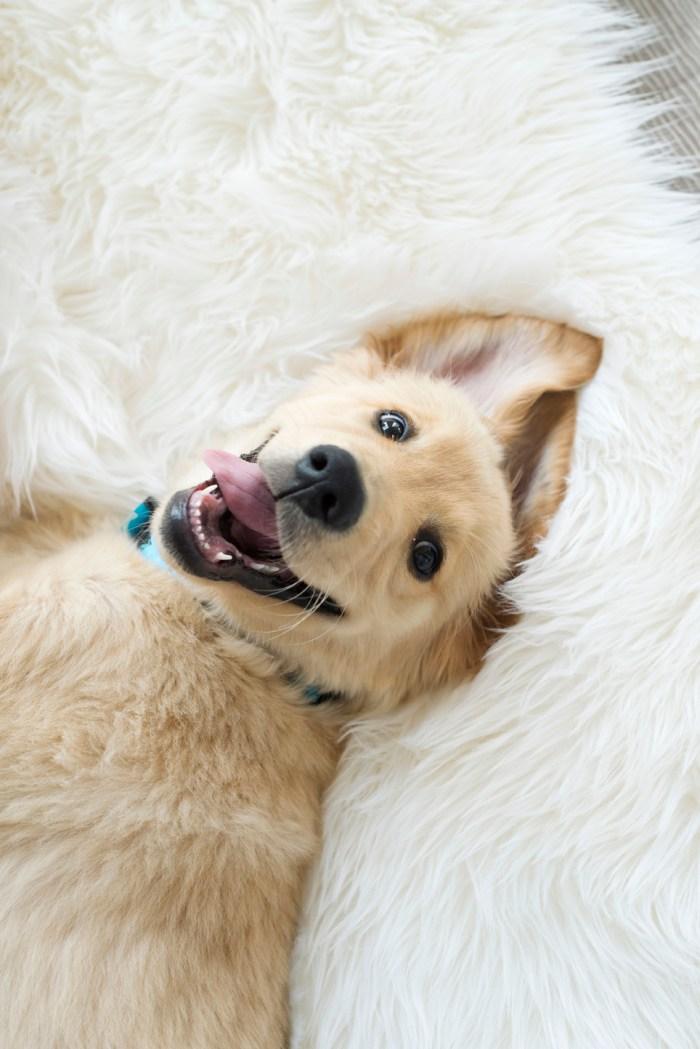 Dayton-Ohio-National-Dog-Day-Session-by-Ashley-Lynn-Photography1010